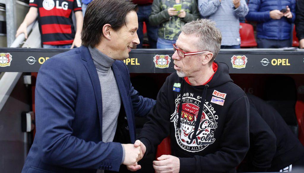 Shake Hands zwischen Roger Schmidt und Peter Stöger: Der 1. FC Köln gewinnt das Derby bei Bayer Leverkusen mit 2:1. (Foto: MV)